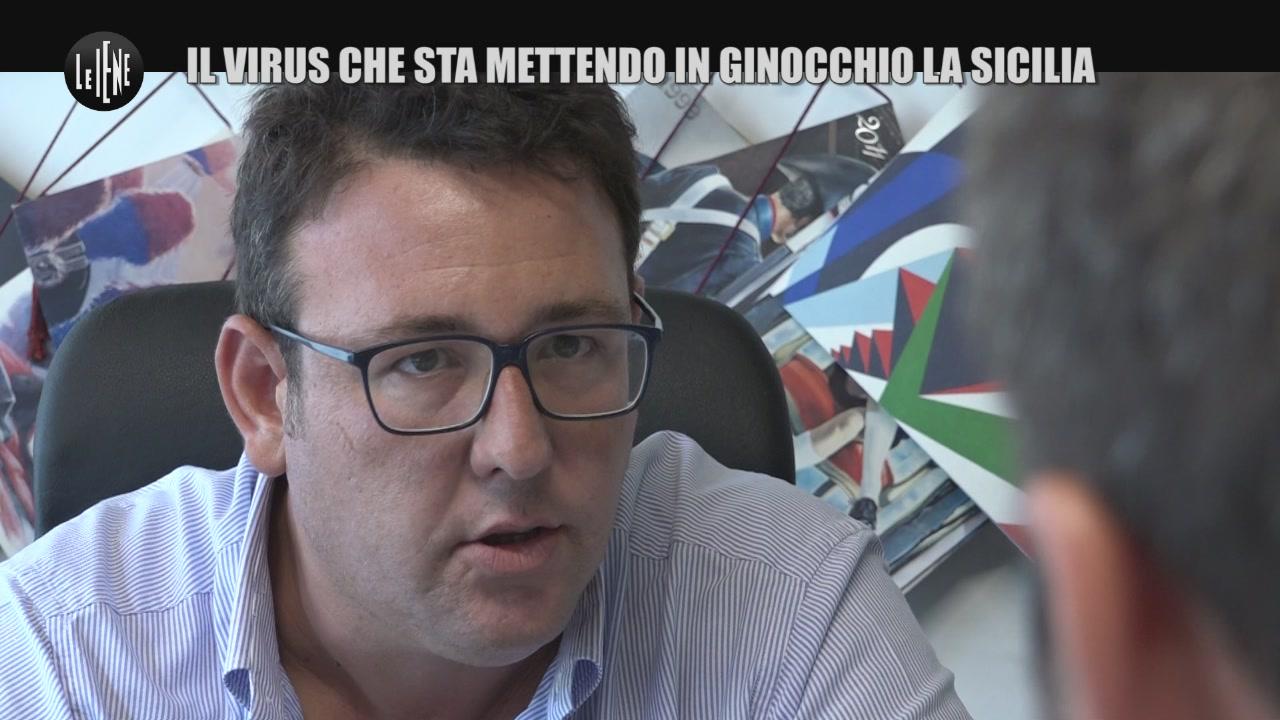 PECORARO: Il virus che sta mettendo in ginocchio la Sicilia