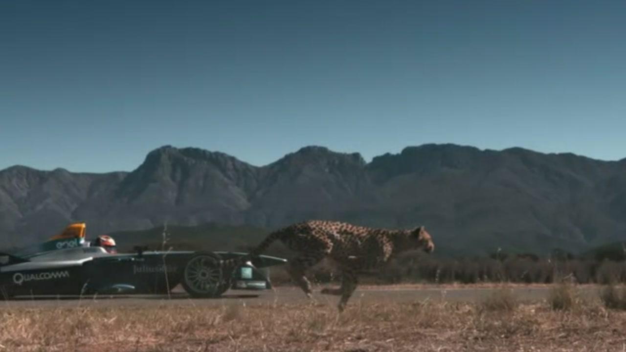 Formula E: la monoposto sfida il ghepardo