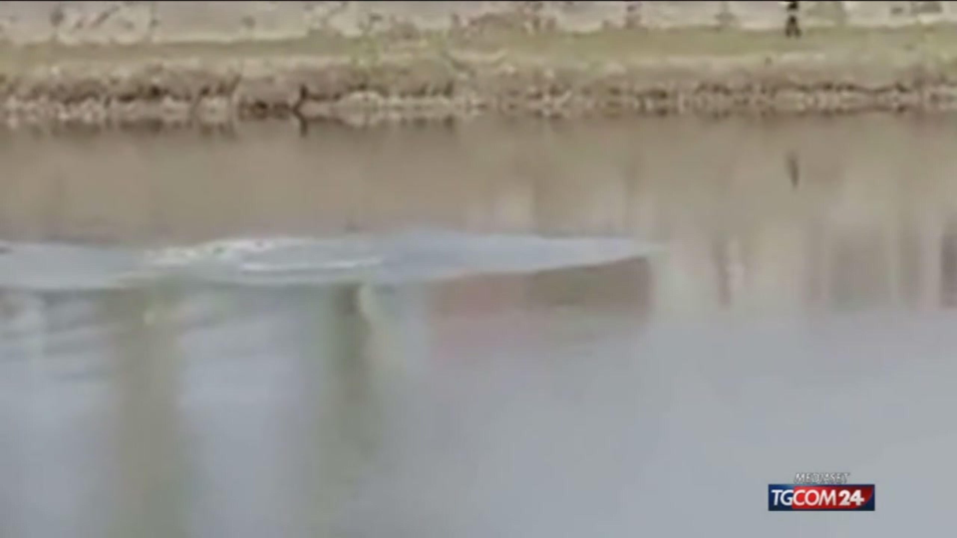 C'è un delfino che nuota nell'Arno