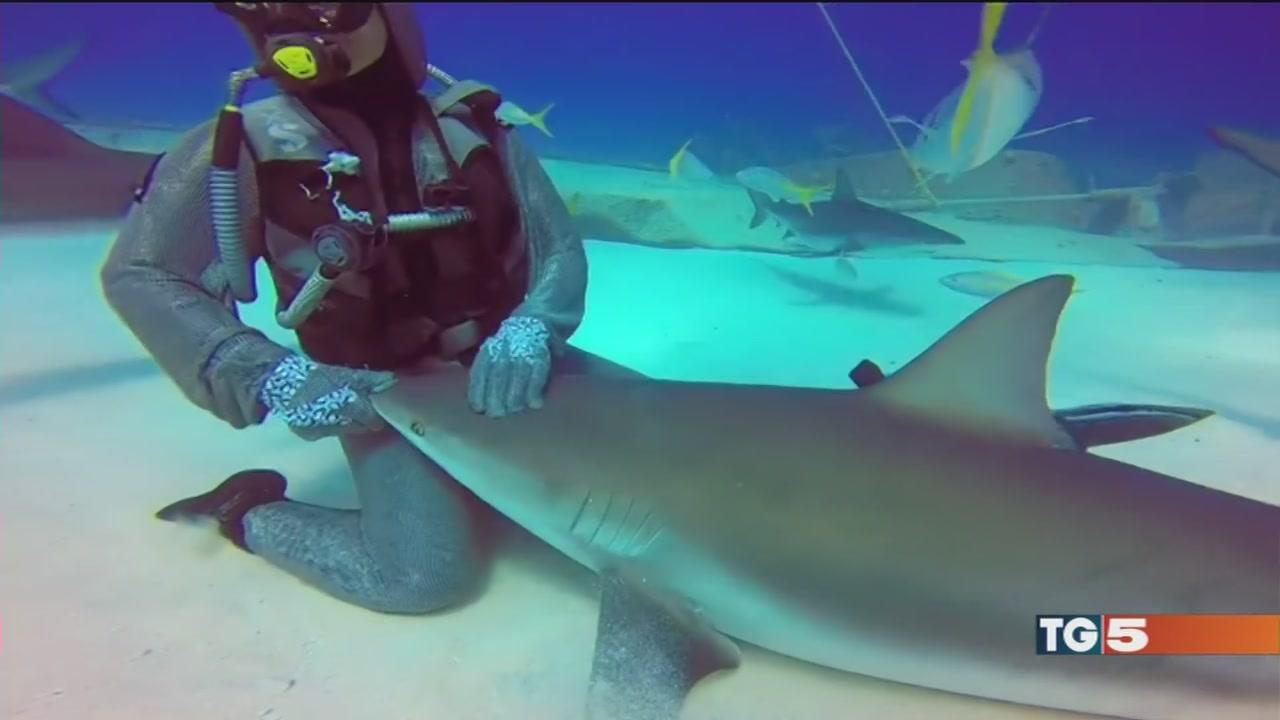 La danza degli squali