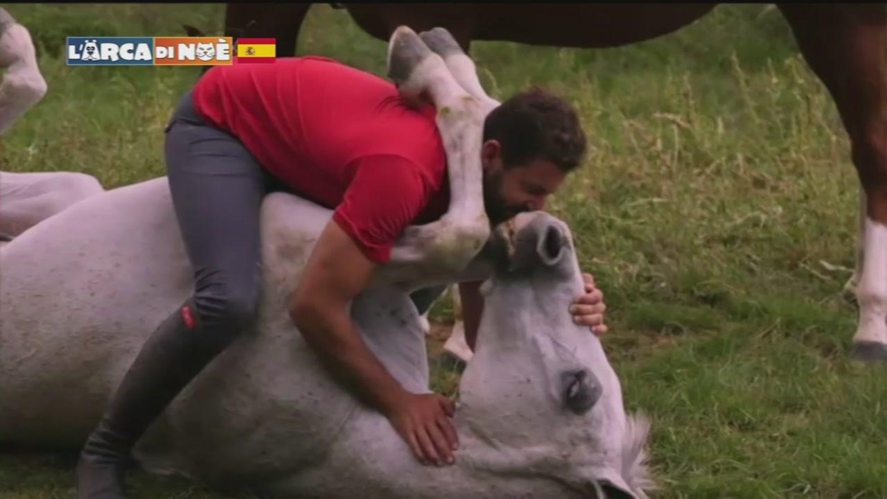 Cavallo Gentile