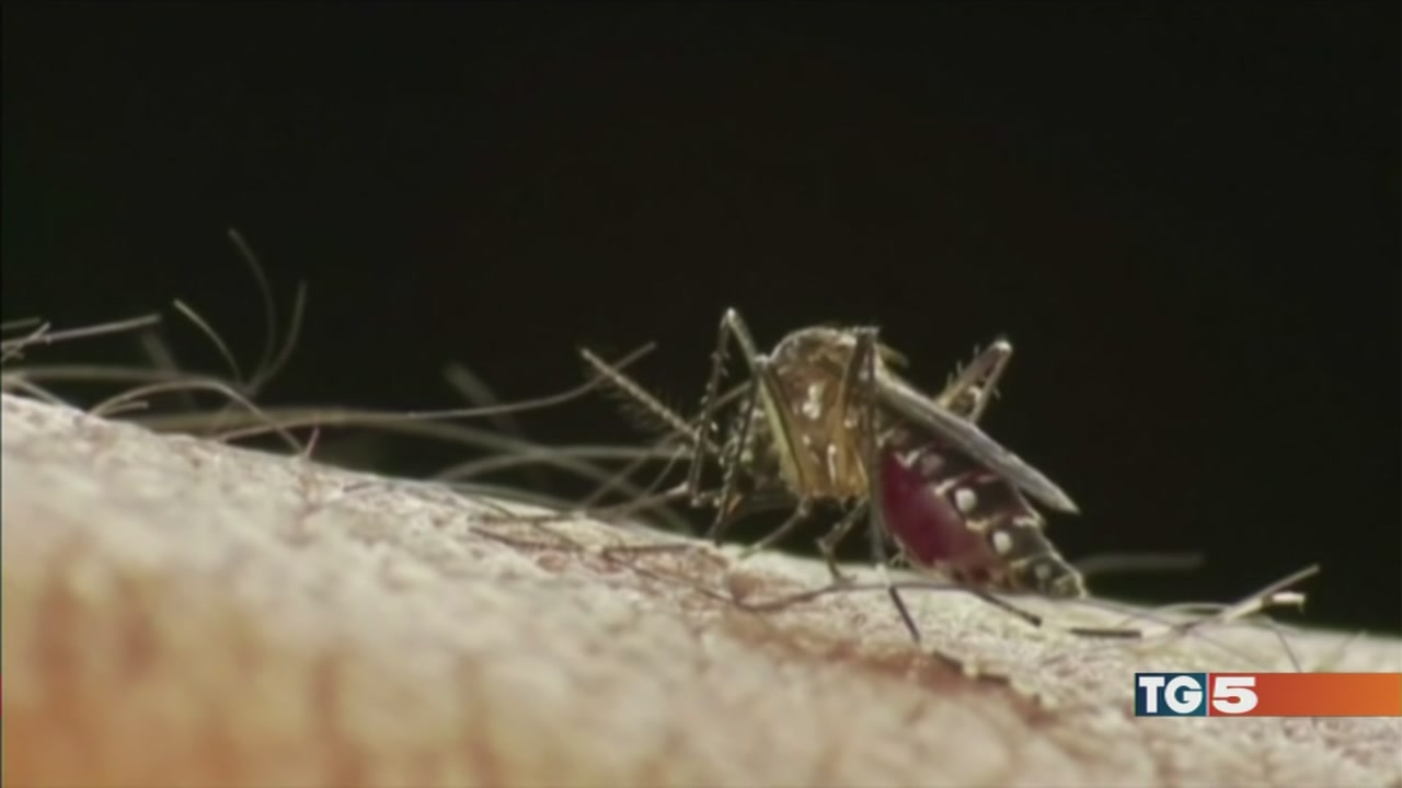 Chikungunya: un caso nelle Marche