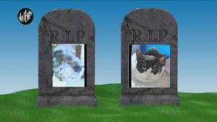 TROMBETTA: Il finto veterinario