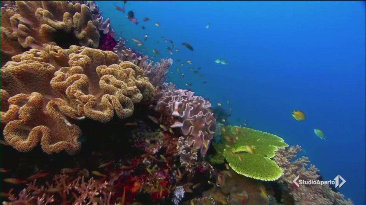 Difendiamo gli oceani