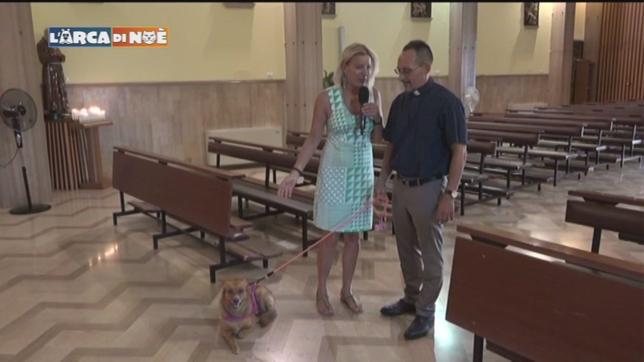 San Rocco e una giornata coi cani