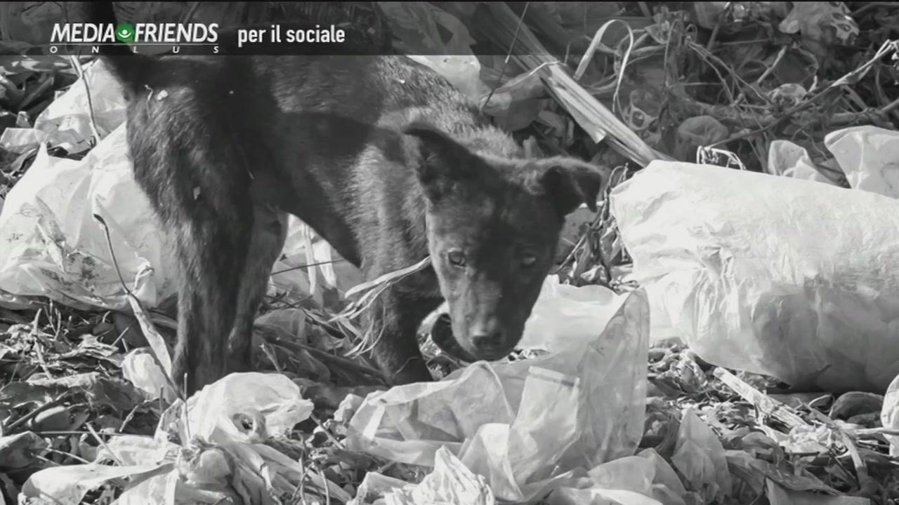 Lega italiana difesa animali e ambiente