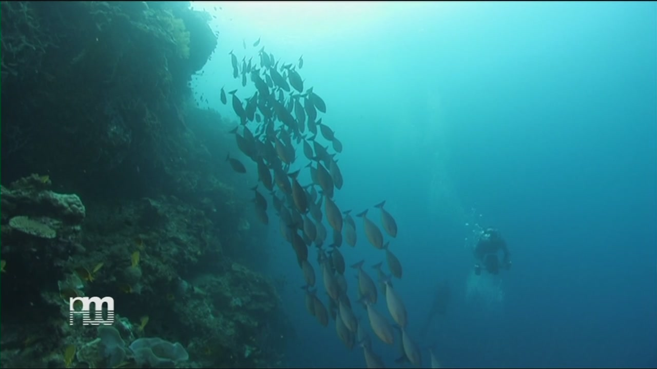 La biodiversità del mare delle Filippine