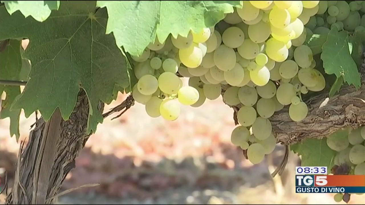 Gusto di Vino: vendemmia anticipata