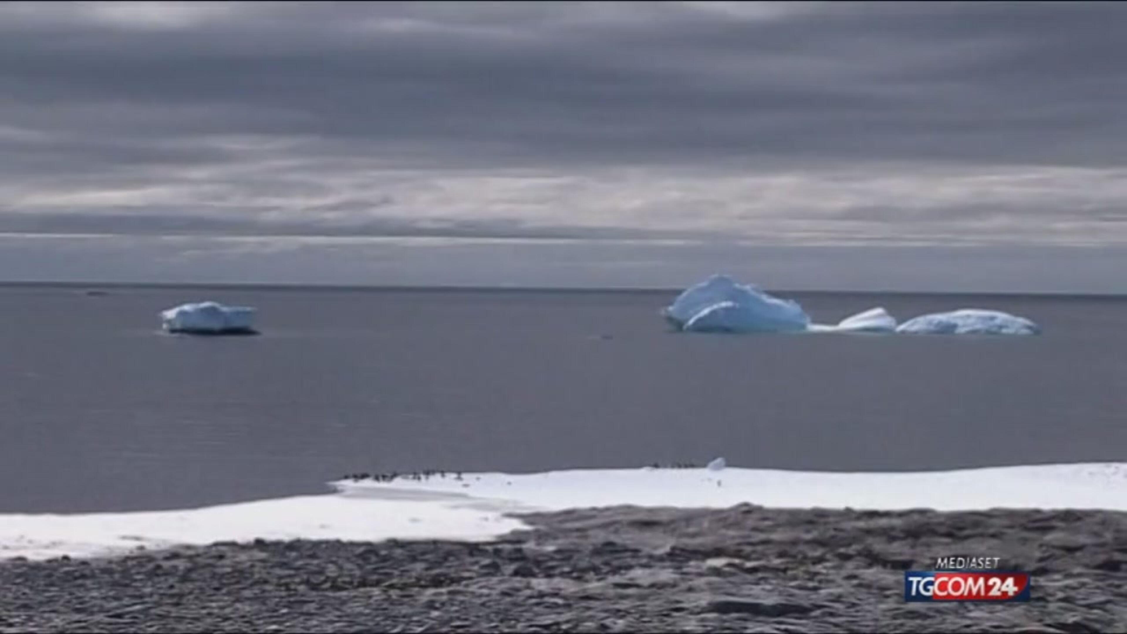 Antartide, sos pinguini
