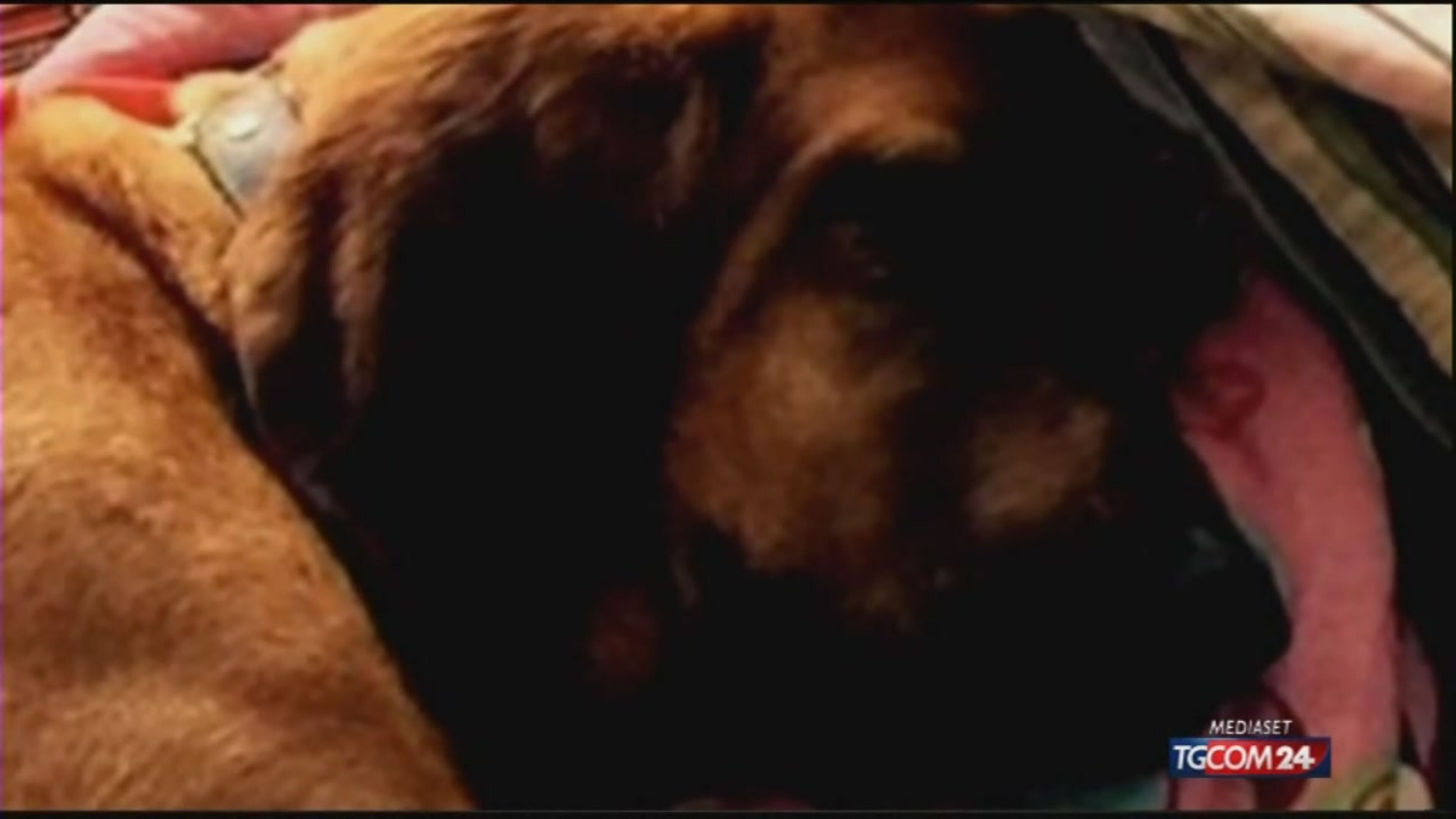 Alabama, cane arriva settimo alla mezza maratona