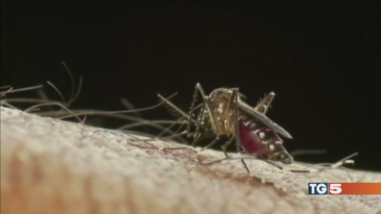 Zanzare, disinfestazioni ma a scoppio ritardato
