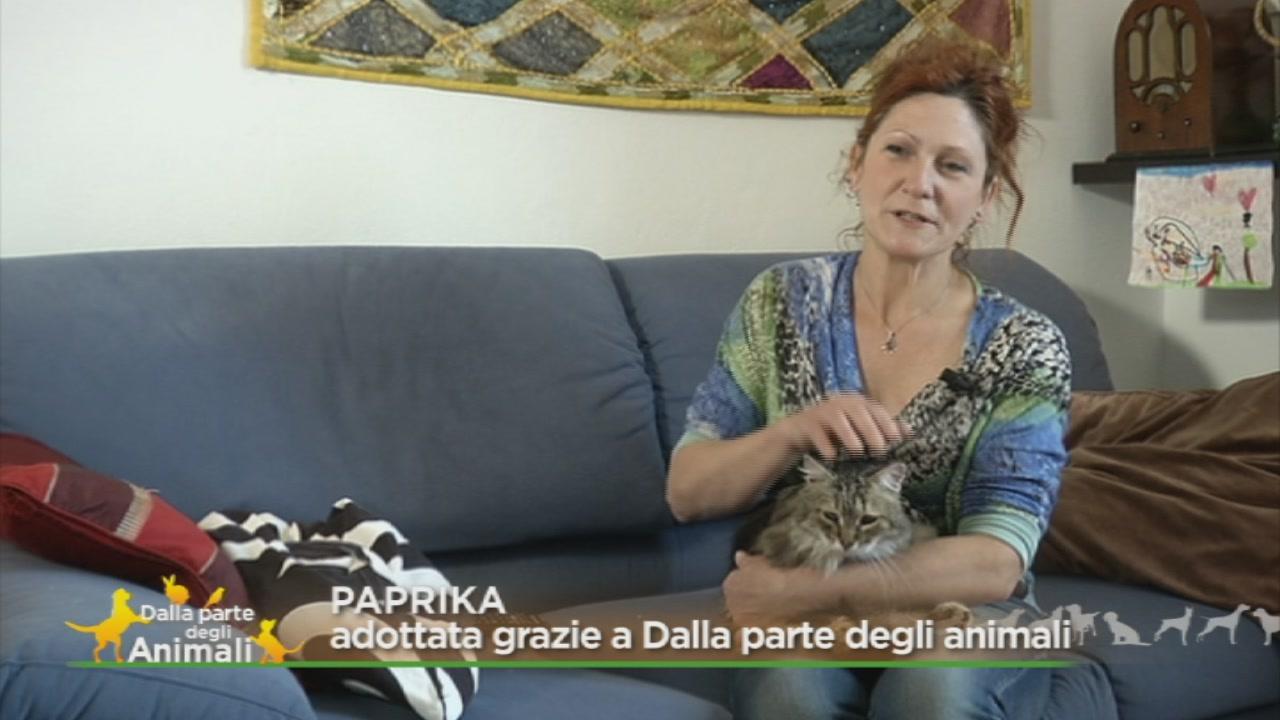 Una storia a lieto fine: l'adozione di Paprika