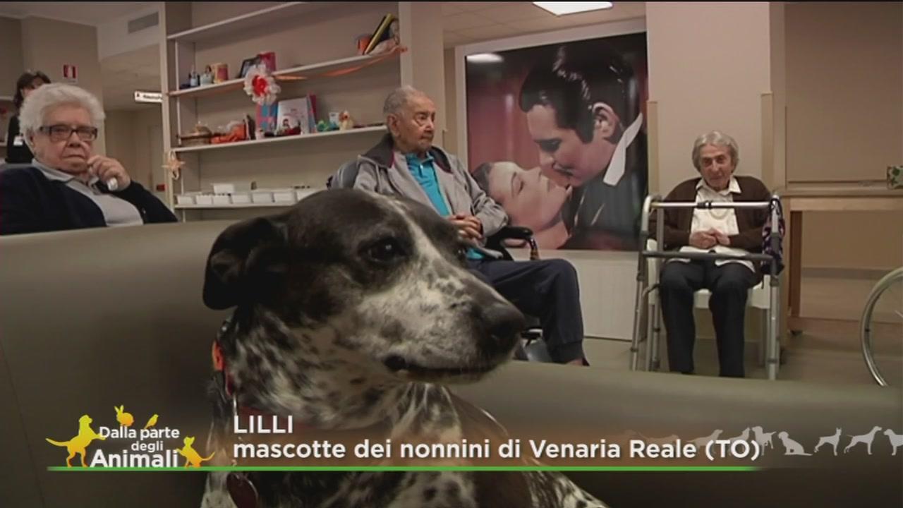 La storia di Lilli