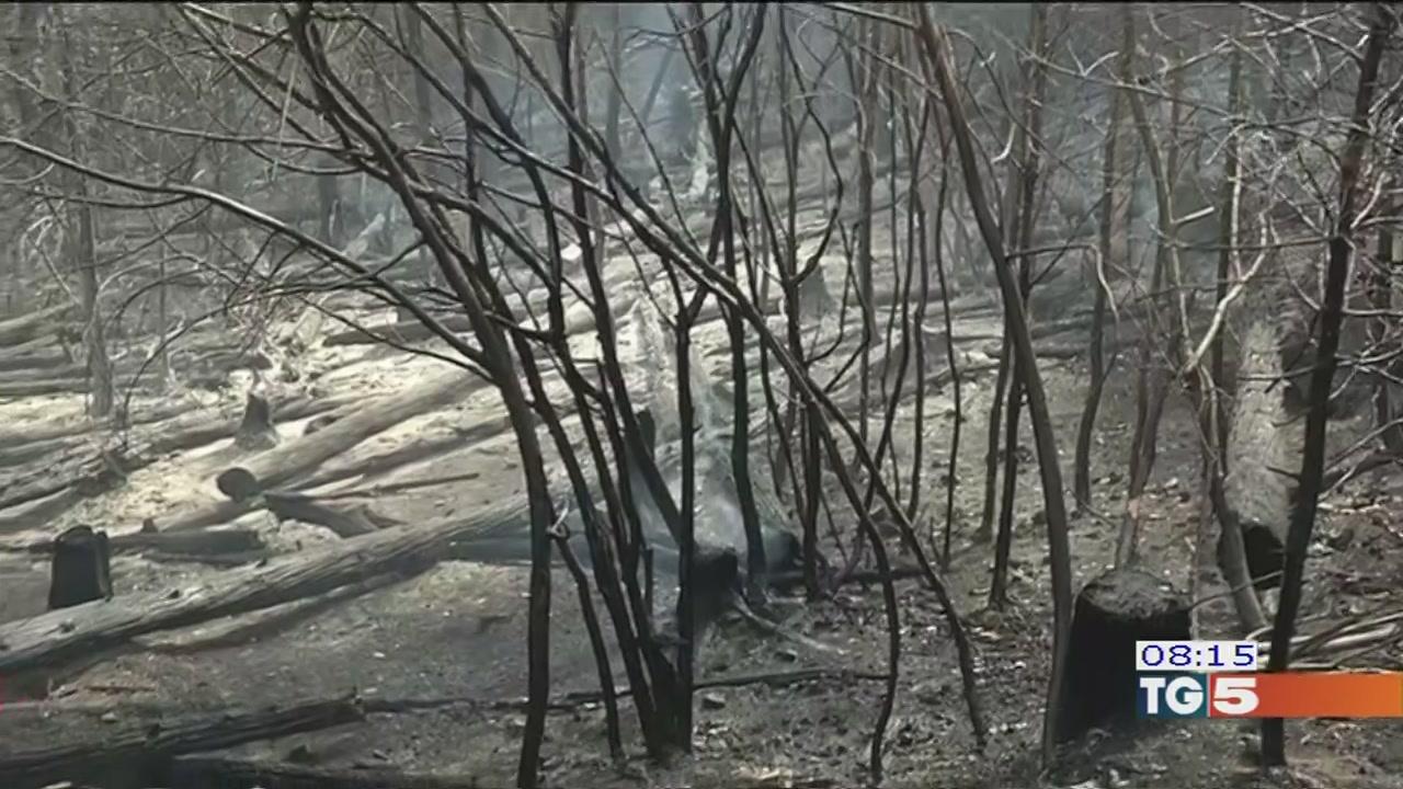 Incendi in Piemonte, ora si teme il vento-Copia