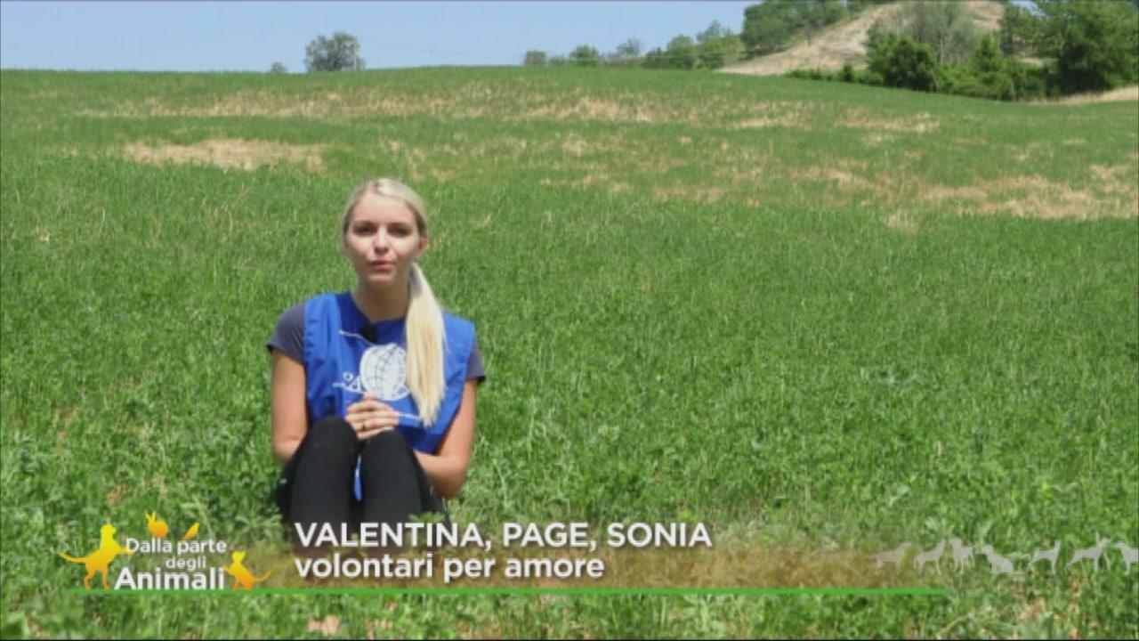 Valentina, Page, Sonia