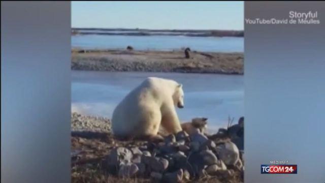 Animali, l'orso polare accarezza un cane