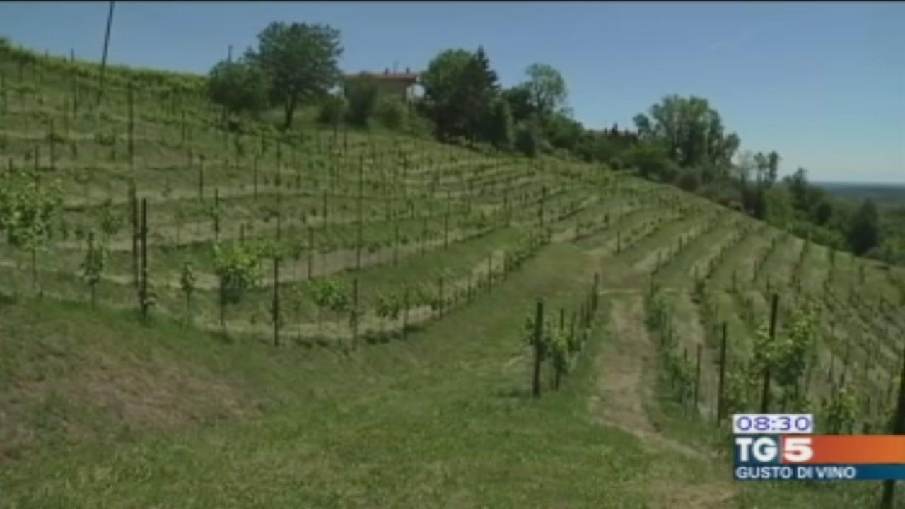 Gusto di Vino: tra le colline di Conegliano