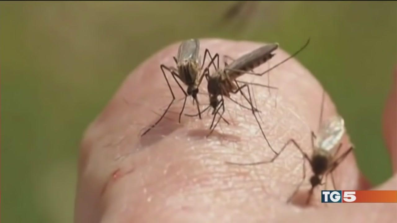 Chikungunya, allarme dell'Oms