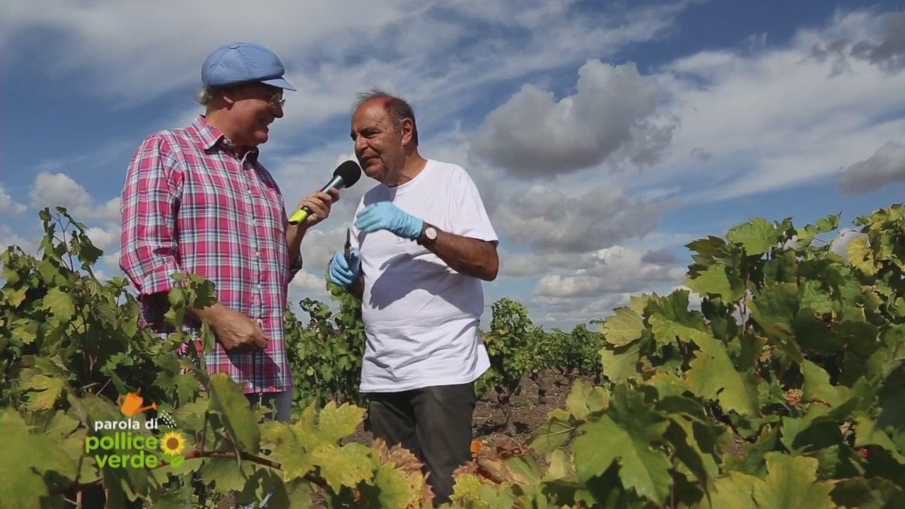 Il vino di Bruno Vespa