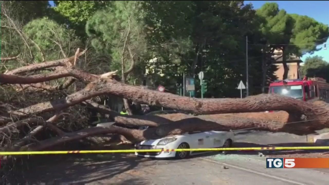 Il vento spazza lo smog, emergenza alberi a Roma