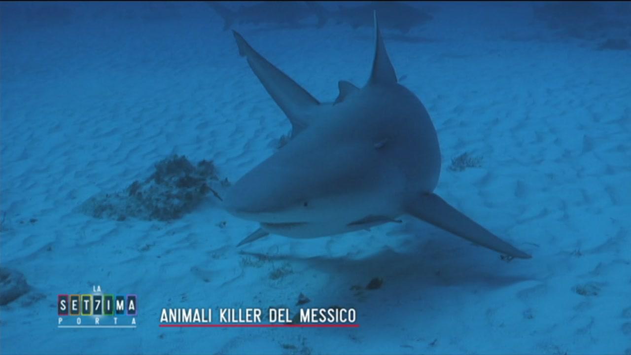 Animali killer del Messico