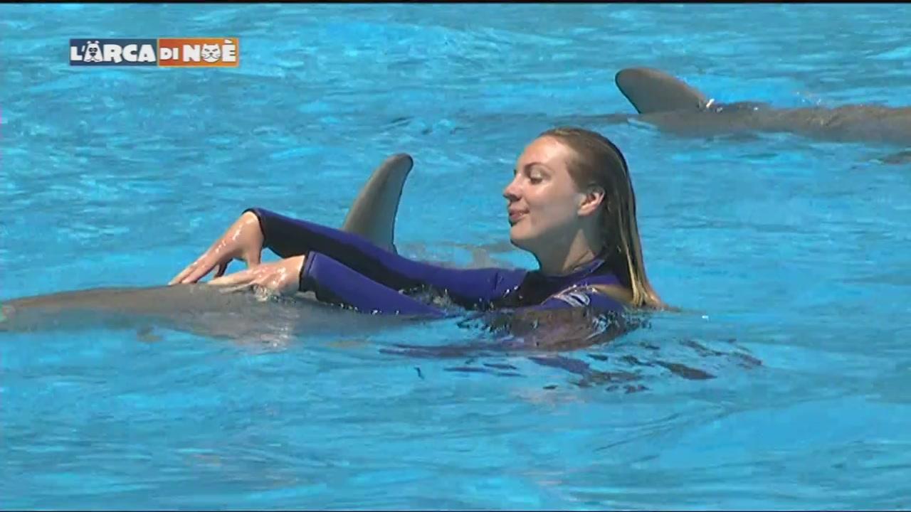 Il comportamento del delfino