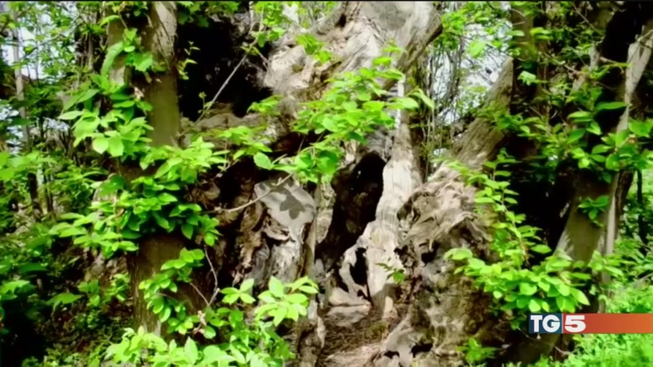 Gli alberi e il loro fascino