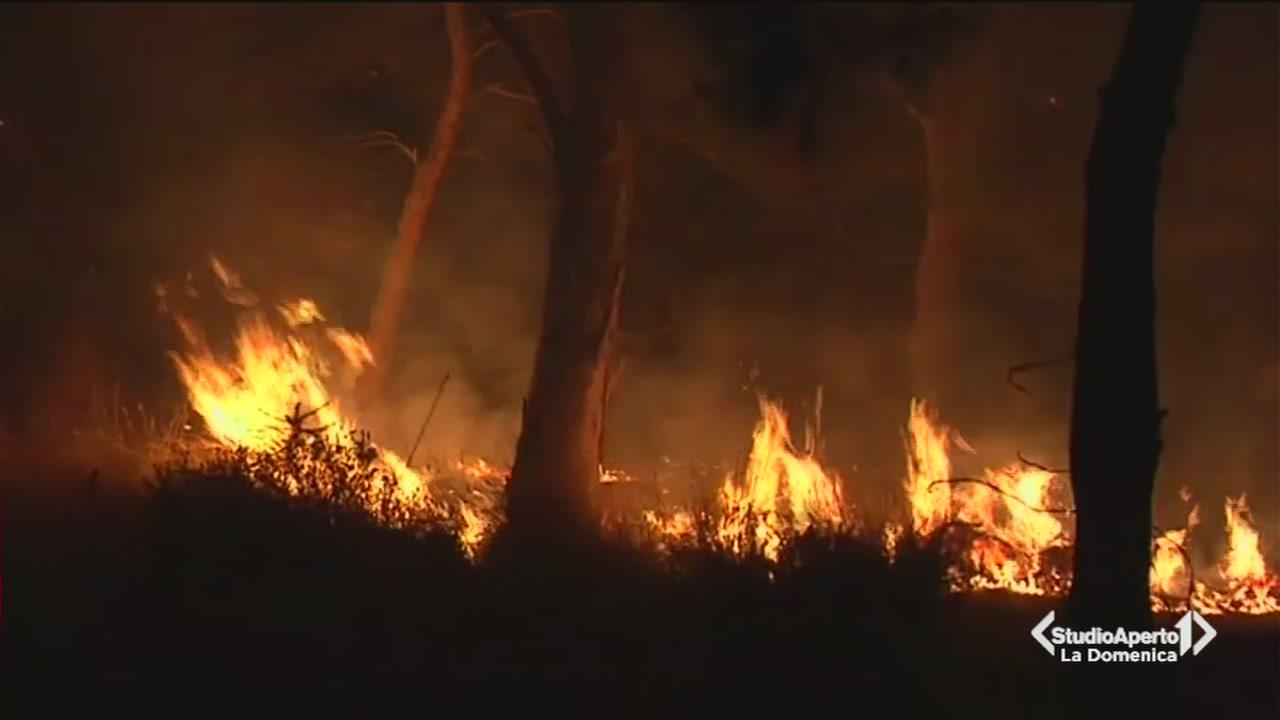 Il Lazio in fiamme