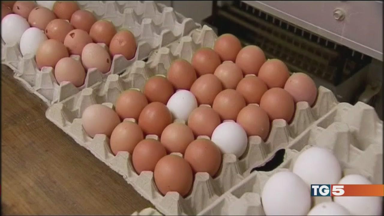 """Le uova contaminate, """"in Italia tutto ok!"""""""
