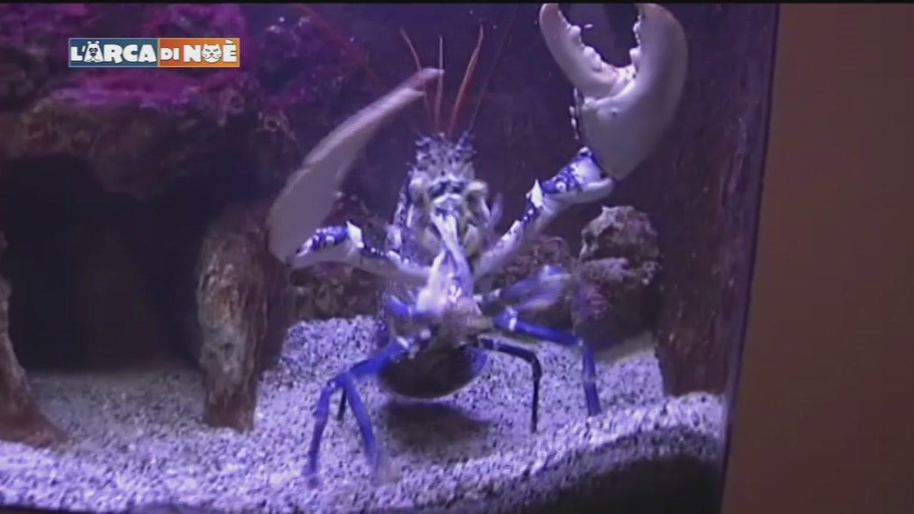 Balla coi pesci