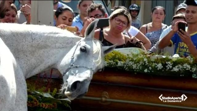 Un cavallo si dispera sulla bara del padrone