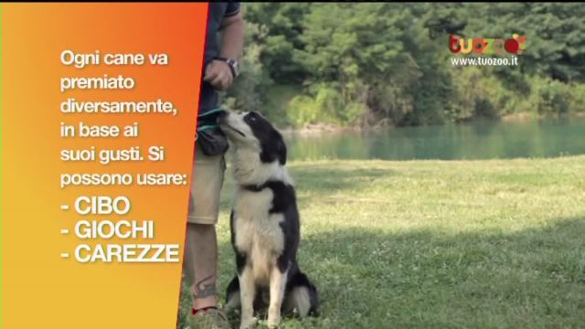 Cani in divisa: obedience