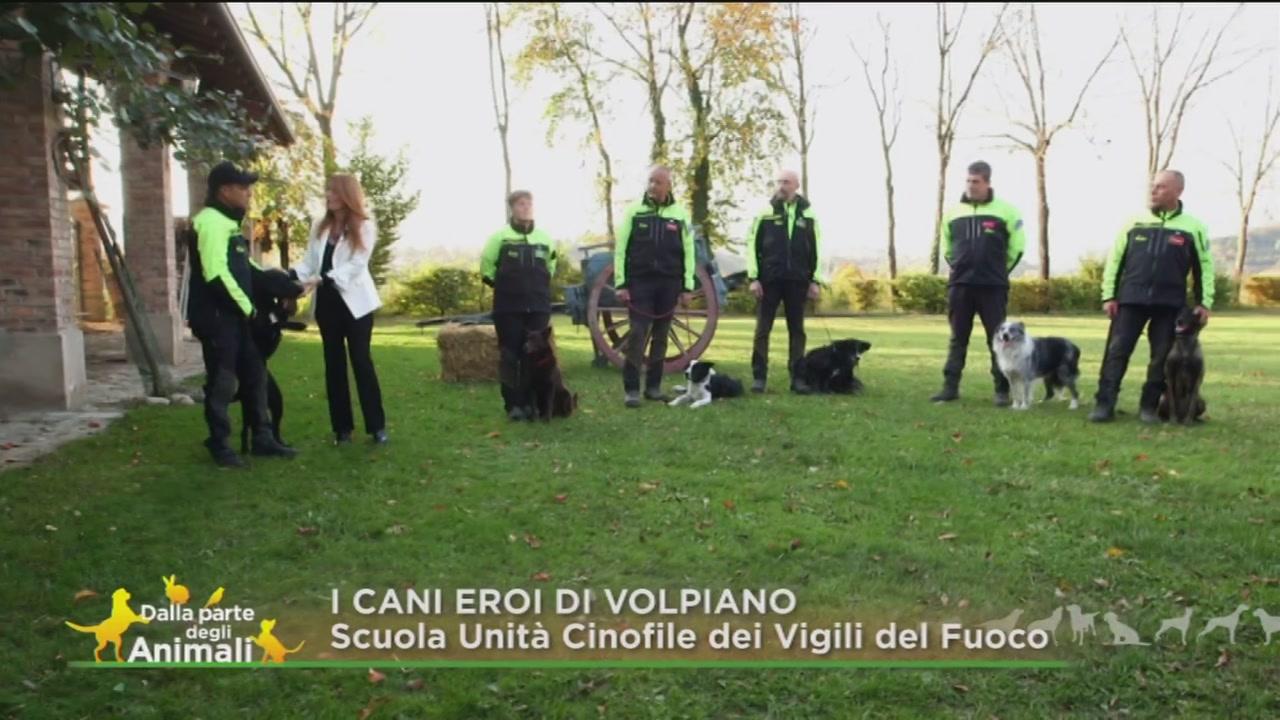 I cani eroi di Volpiano