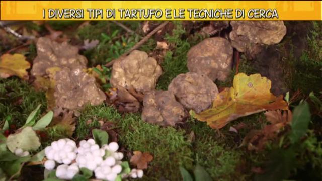 I diversi tipi di tartufo video virgilio - Diversi tipi di figa ...