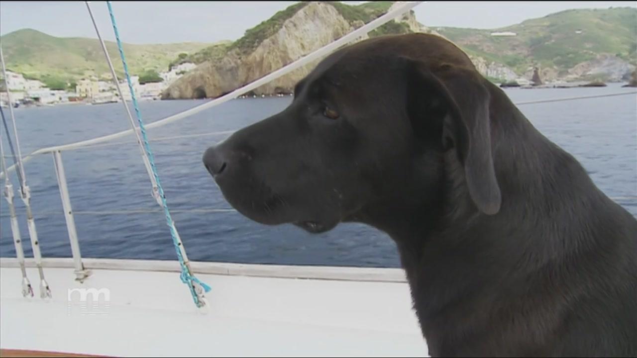 Un cane in barca