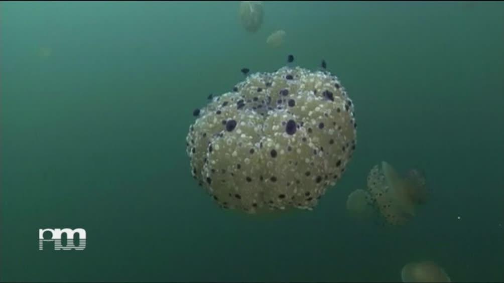 Il giorno della medusa