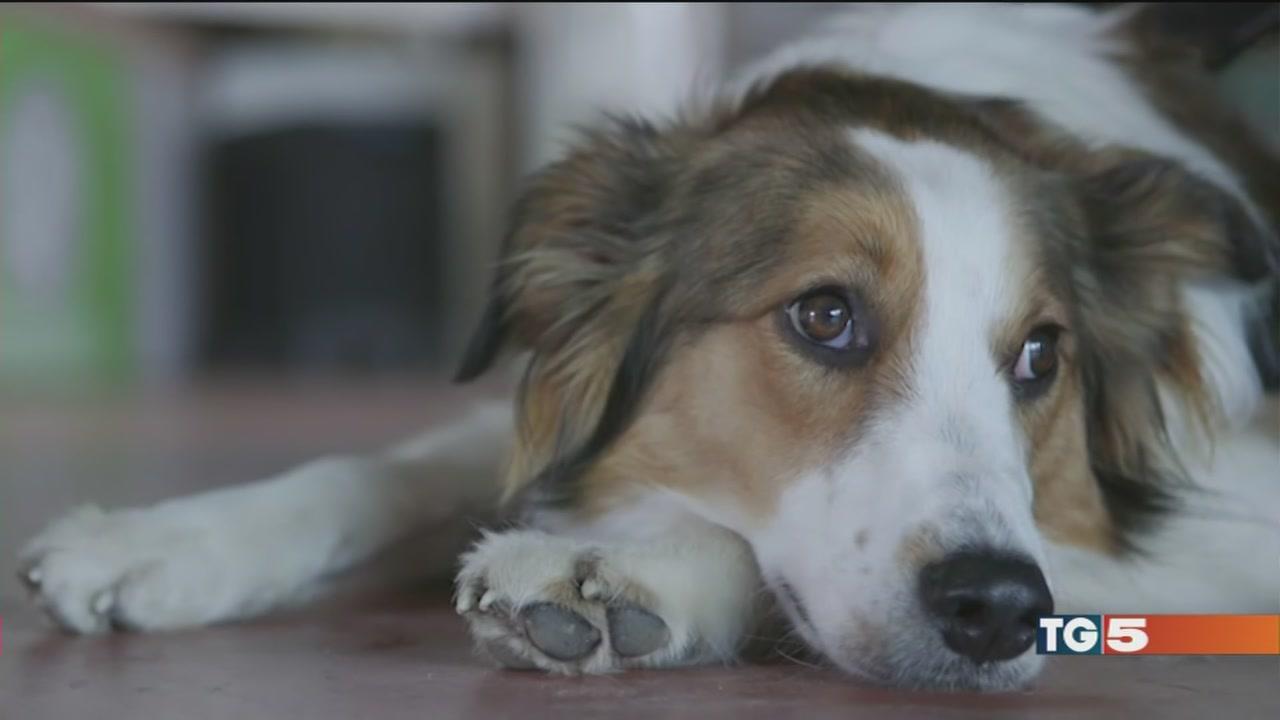 Grazie ai cani eroi tante vite salvate