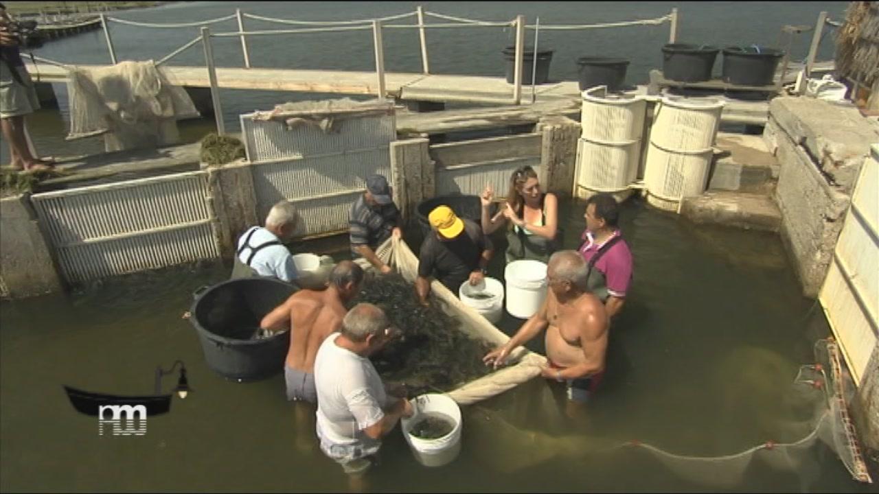 L'acquacoltura in Sardegna