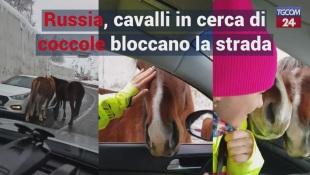 Russia, cavalli in cerca di coccole bloccano la strada