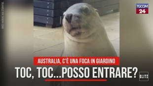 Australia, c'è una foca in giardino
