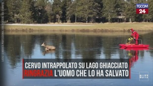 Cervo intrappolato in un lago ghiacciato, dopo il salvataggio ringrazia il suo soccorritore