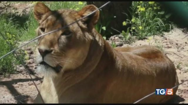 Animali traumatizzati la riserva per salvarli