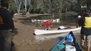 Australia, koala salvato dalla piena del fiume