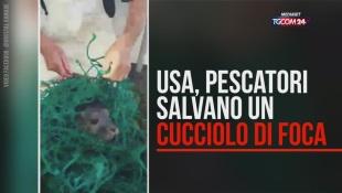 Usa, il salvataggio del cucciolo di foca