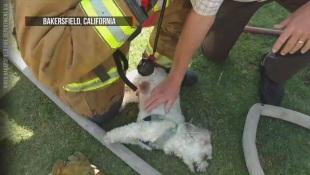 Usa, la tenacia dei vigili del fuoco salva un cane intossicato in un incendio