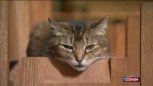 E' la Giornata del Gatto