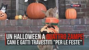 Halloween a quattro zampe, cani e gatti vestiti