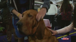 Al via il dog show di New York