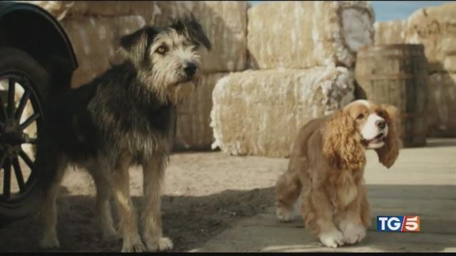 Stavolta sì che gli attori sono cani!
