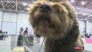 Tremila cani di 300 razze diverse in mostra a Roma